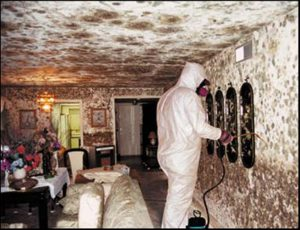Mold removal can be undertaken by the individuals